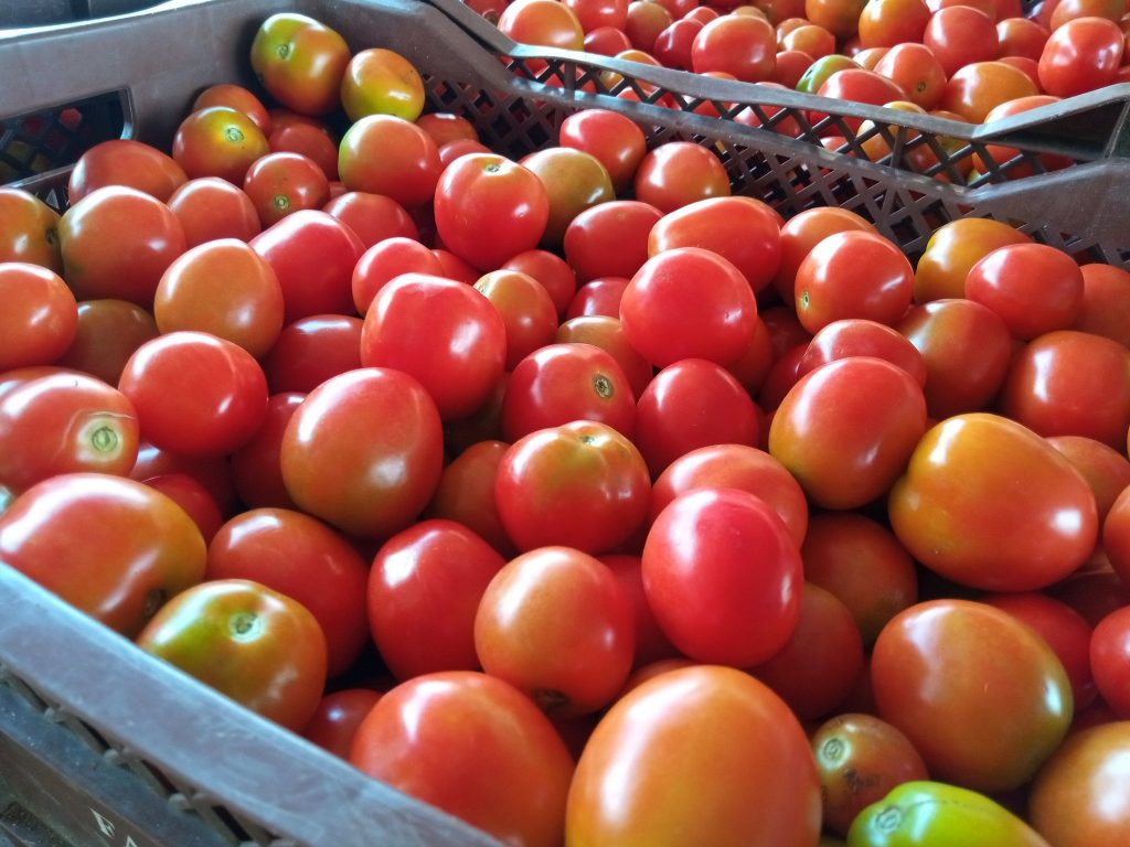 tomatoes in crates